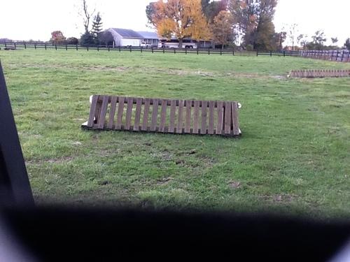Fence 16 - Tiger trap