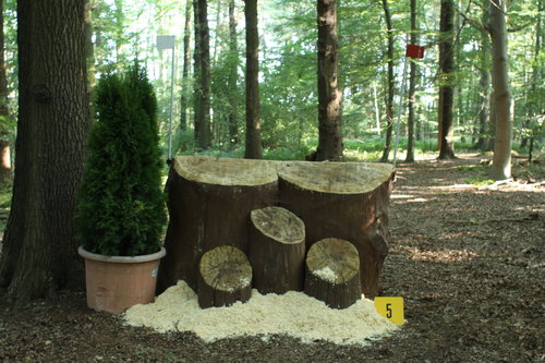 Fence 5 - Holzfäller Reste