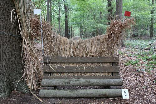Fence 5 - Hexenbesen