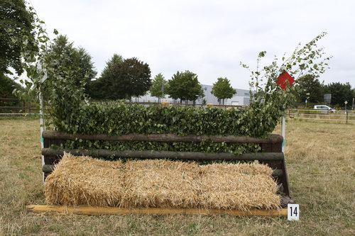 Fence 14 - Hecke