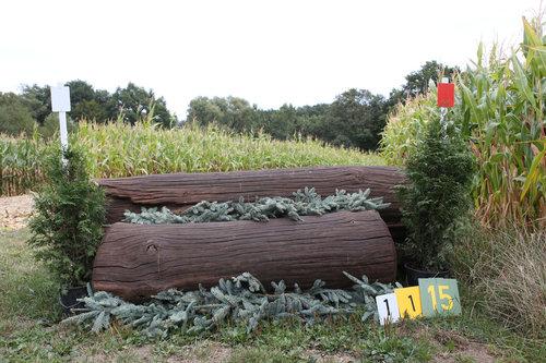 Fence 15 - Dicker Baum