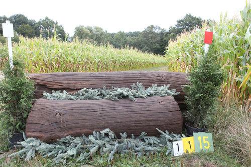 Fence 1 - Dicker Baum