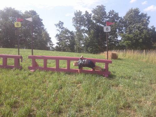 Fence 8 - Pink Ladder