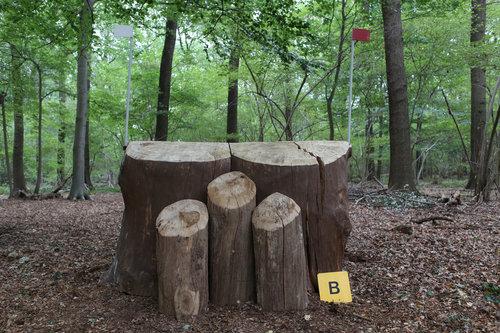 Fence 4B - Holzfällers Reste