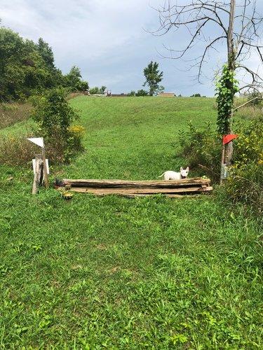 Fence 12 - Mini Cedar Coop