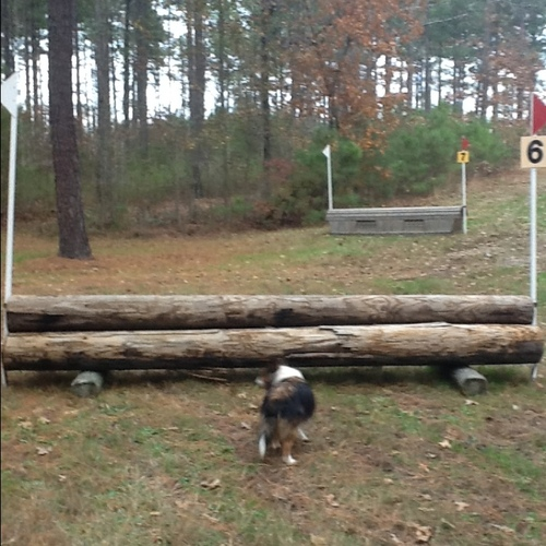 Obstacle 6 - Logs