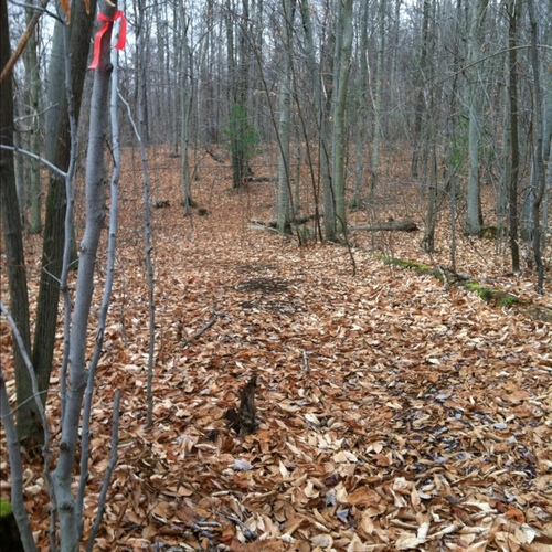 Fence 9 - Trail turns back downhill - trees marked with orange tape
