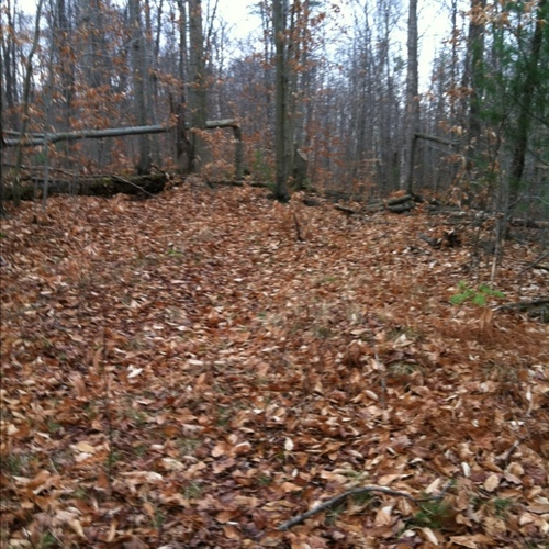 Hindernis 17 - From Tractor Rd ext turn back to another trail that needs clearing. Goes by old pine stacks