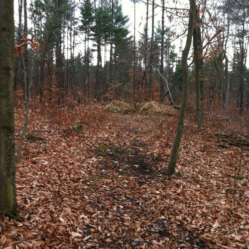 Hindernis 18 - Coming down to grass pile with deer stand to left and down to gully trail to right