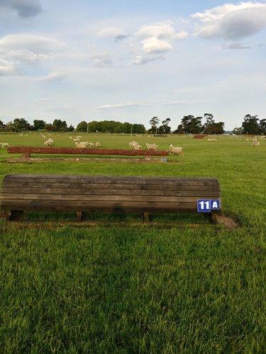 Fence 11AB -