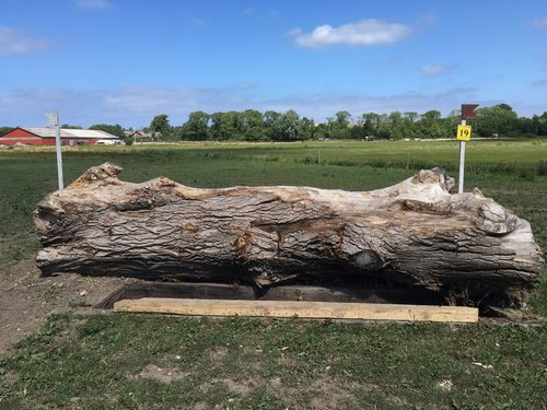 Fence 19 - Stor stamme med hul foran
