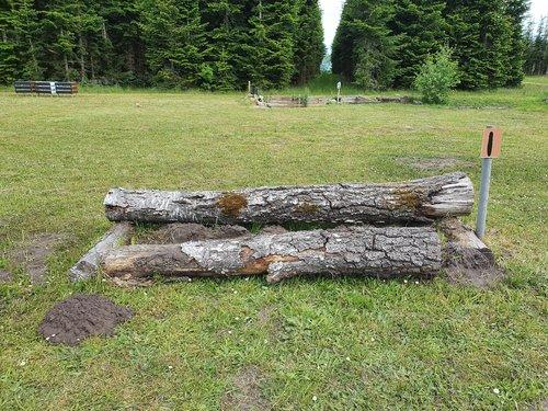 Fence 1 - Birke stamme