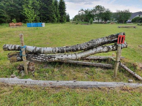 Fence 11 - Trakehner