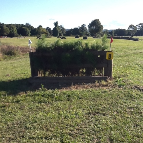 Fence 10B - Pine trees