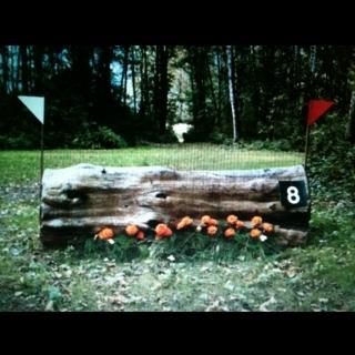Fence 8 - New log