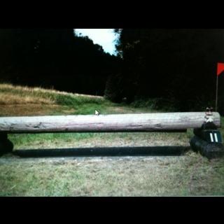Fence 11 - Gunther's menace - trakener