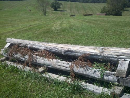 Fence 3 - Hogsback