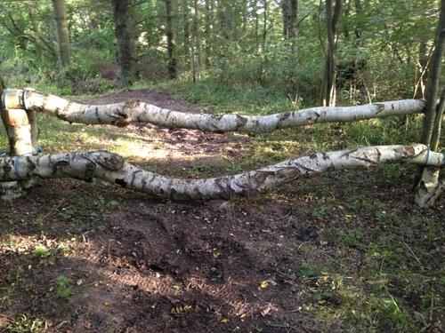 Fence 14 - Birk i skoven