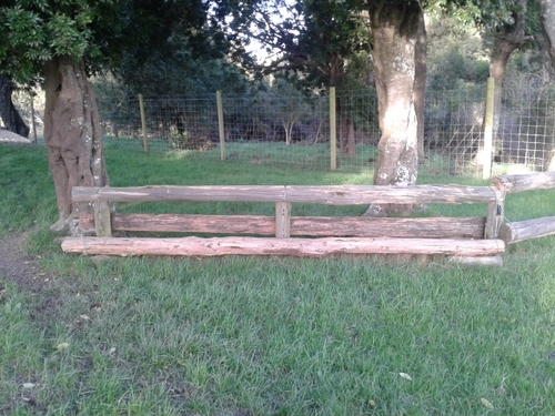 Fence 8 - Under tress